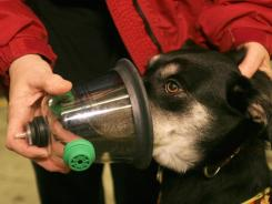 Nancee Schaffner of the Rutland Area Disaster Animal Response Team demonstrates an oxygen mask for pets on Maple, a sheperd mix dog, at the fire station in Clarendon, Vt.