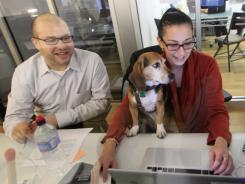 In this photo, Sally, a 4-year old beagle sits on Jamie Silverman's lap as she works with Jared Shechtman at the office of Extrovertic in midtown Manhattan.