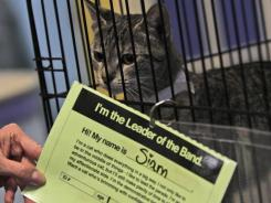 Executive director of the Richmond SPCA, Robin Starr, holds a report on Siam, one of the animals available for adoption as part of the Meet Your Match facility in Richmond, Va.