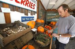 Rick Perkins a Santa Barbara native, shops for persimmons at Fairview Gardens self serve organic food stand in Santa Barbara, CA. As thoughts turn to New Year's resolutions, some might ponder whether to try to eat more organic. They won't be alone; sales of organic goods rose 5% from 2008 to 2009 and now make up almost 4% of the market.