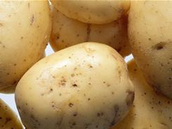 Like many tempting Irish foods, this recipe boasts golden potatoes.